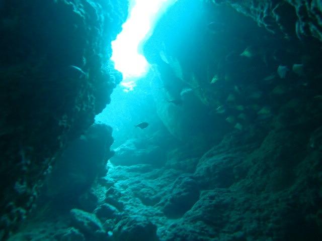 來沖繩海之星一起潛水!!