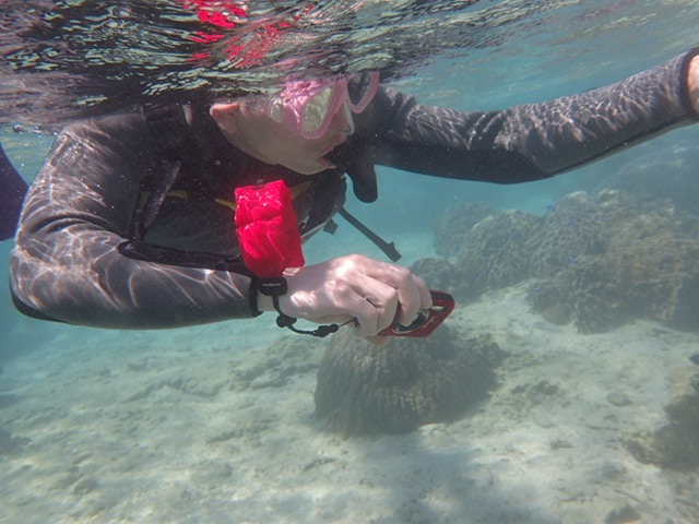 11月5 熱帶魚線路浮潛