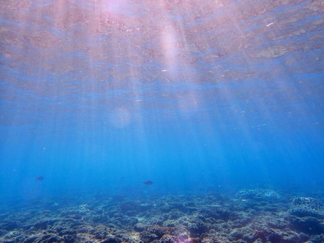 沖繩潛水執照是