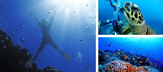 新線路介紹-慶良間諸島體驗潛水&浮潛