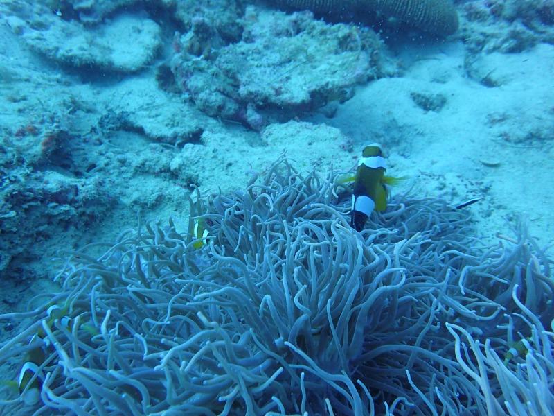 海洋生物大百科13