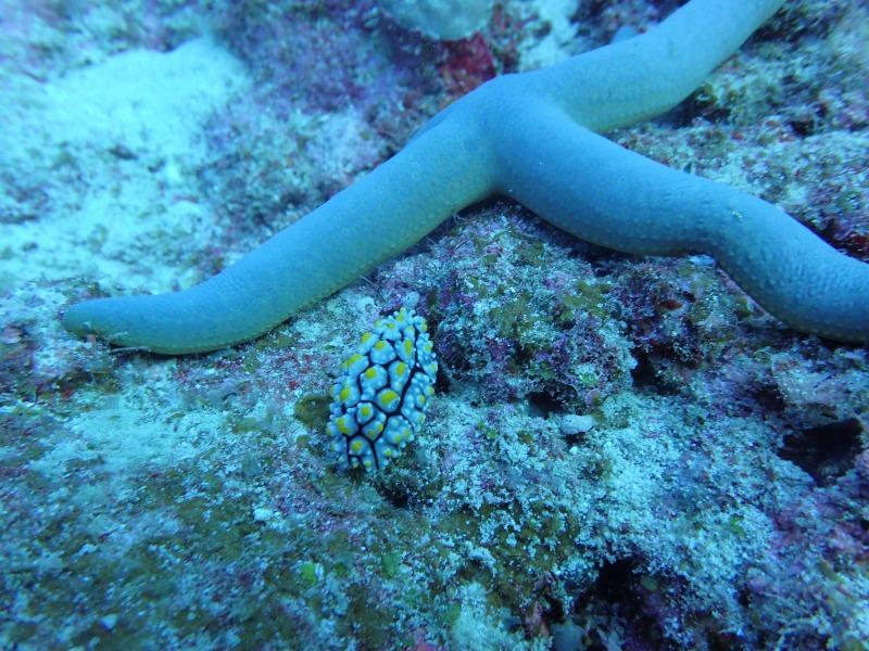 海洋生物大百科12