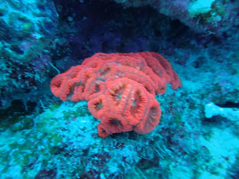 海洋生物大百科14