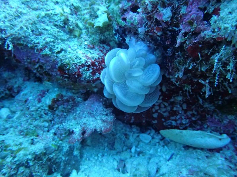 海洋生物大百科15