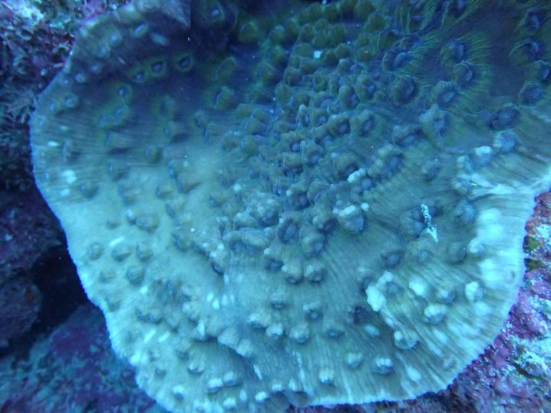 海底的生命多種多樣(⊙o⊙)哦