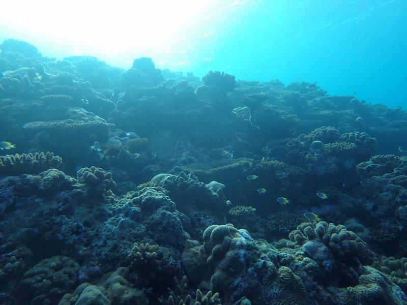 在海底拍到太陽