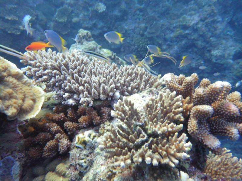 珊瑚和熱帶魚的結合