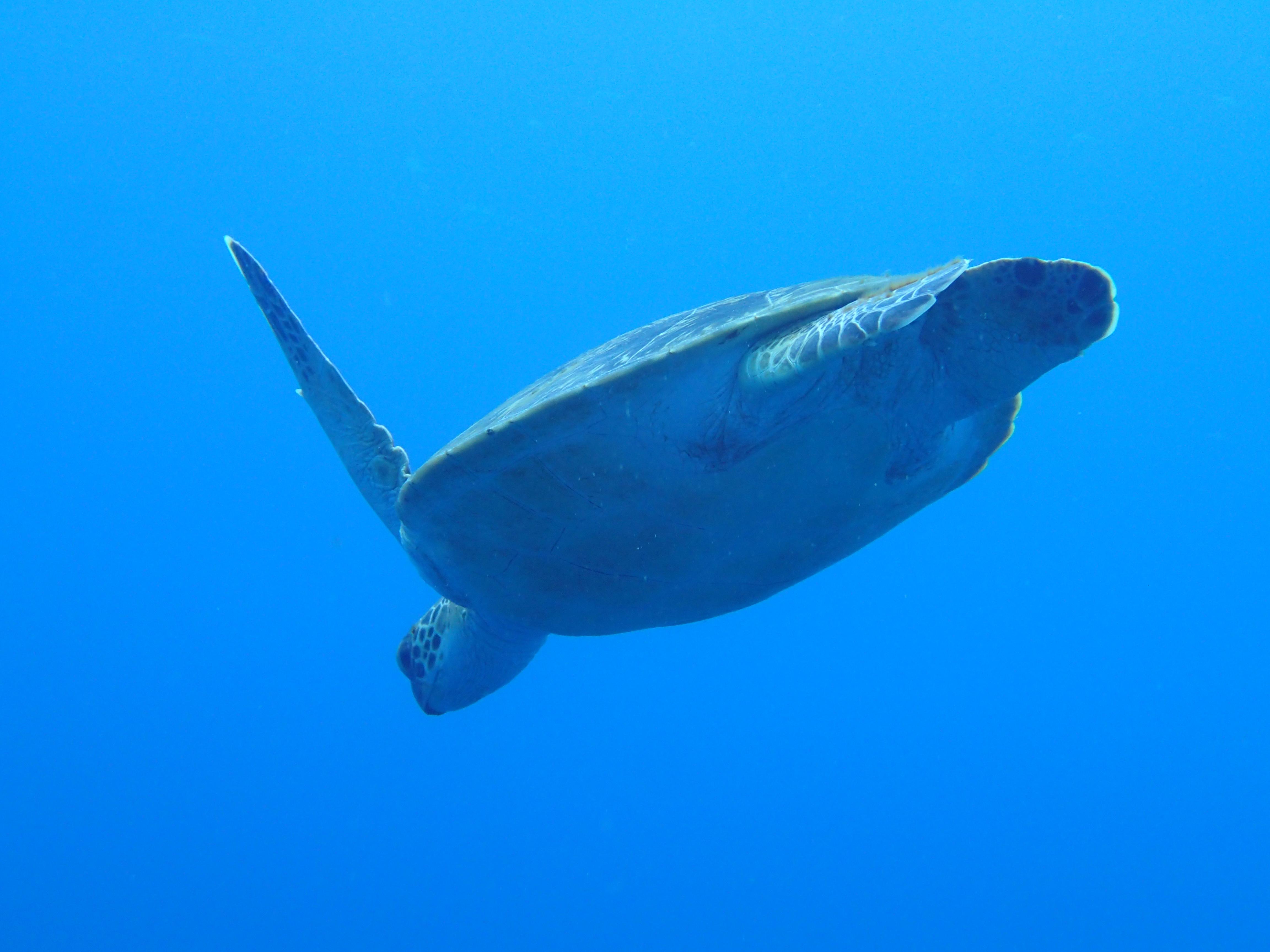 慶良間諸島體驗潛水&浮潛