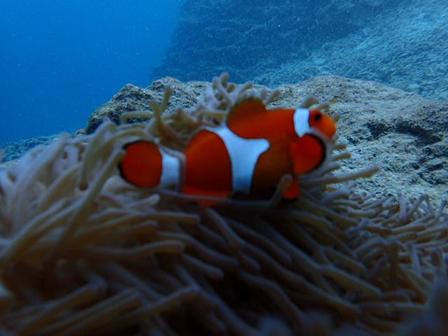 2015.4.22热带鱼体验潜水