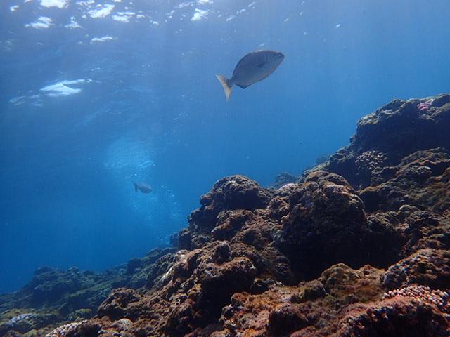 2015.4.25青洞体验潜水