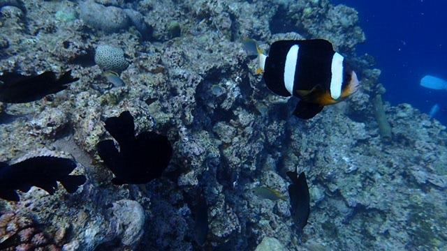 2015.6.26青洞浮潜