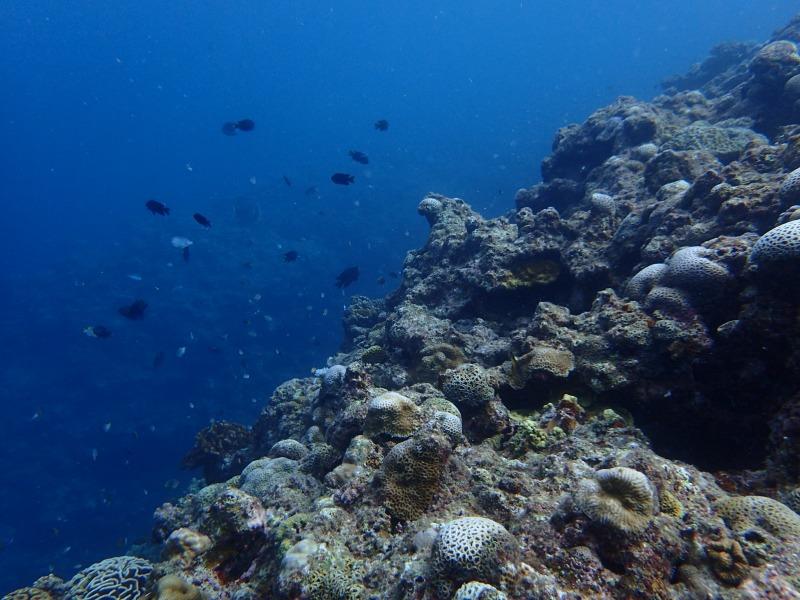 2015.9.3青洞體驗潛水