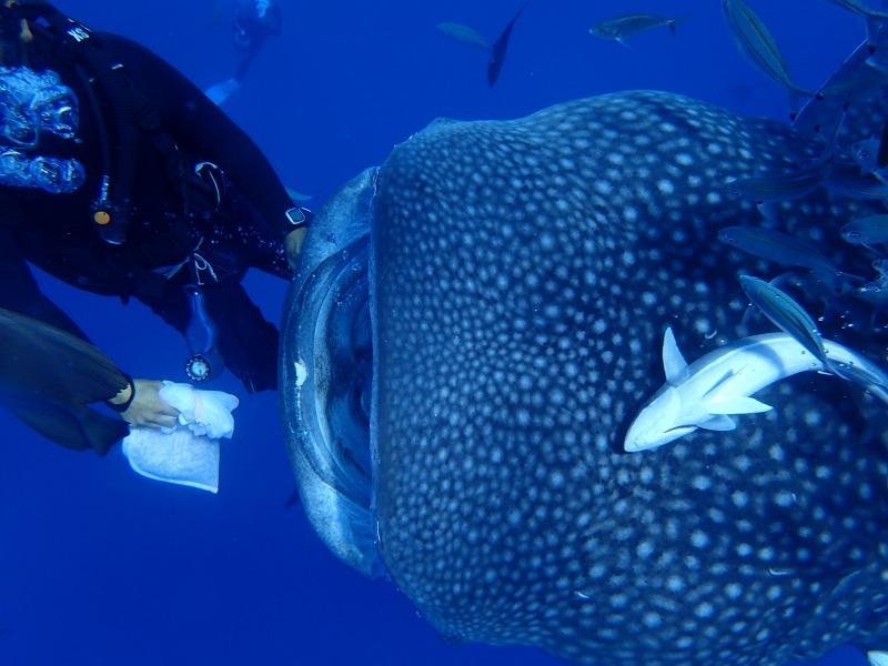 2015.9.13下午鯨鯊體驗潛水