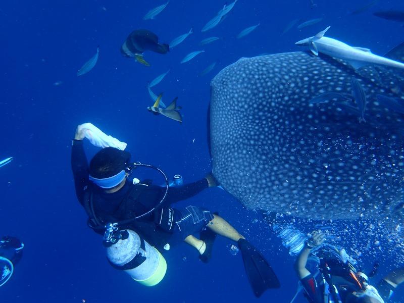 2015.9.19鯨鯊體驗潛水