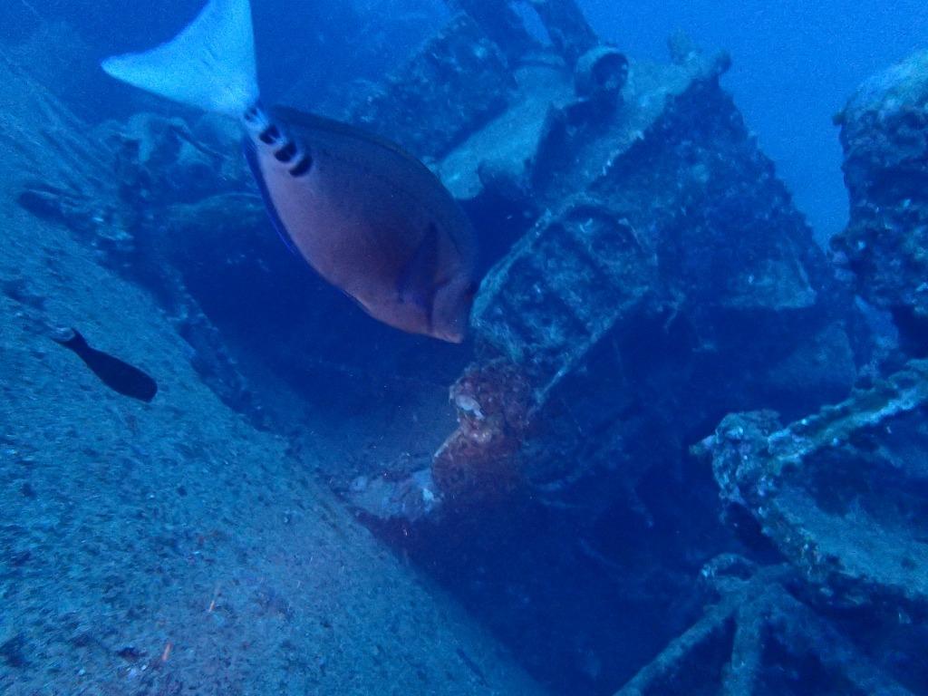 沉船EMMONS(14)