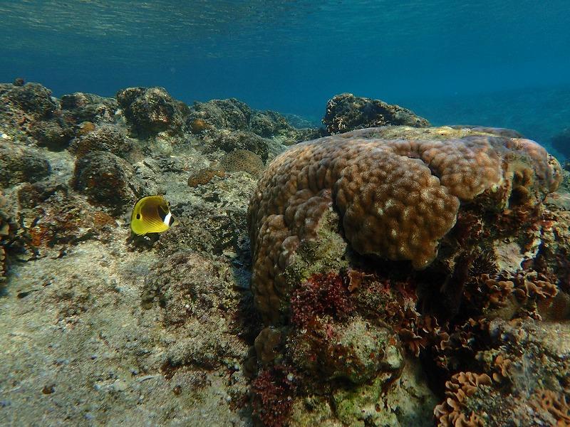 沖繩信息066中頭郡西原町的觀光休閒·推薦景點