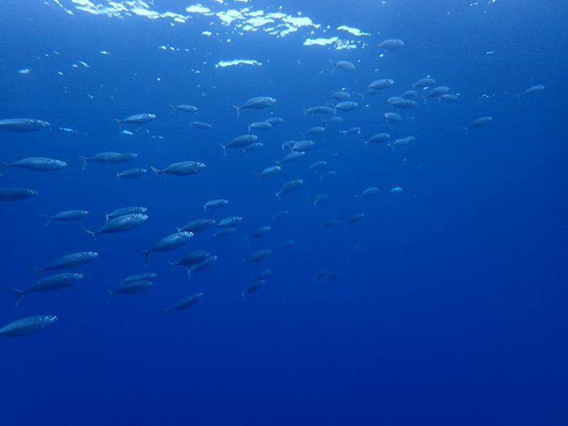 沖繩信息070沖繩縣浦添市的觀光休閒·推薦景點