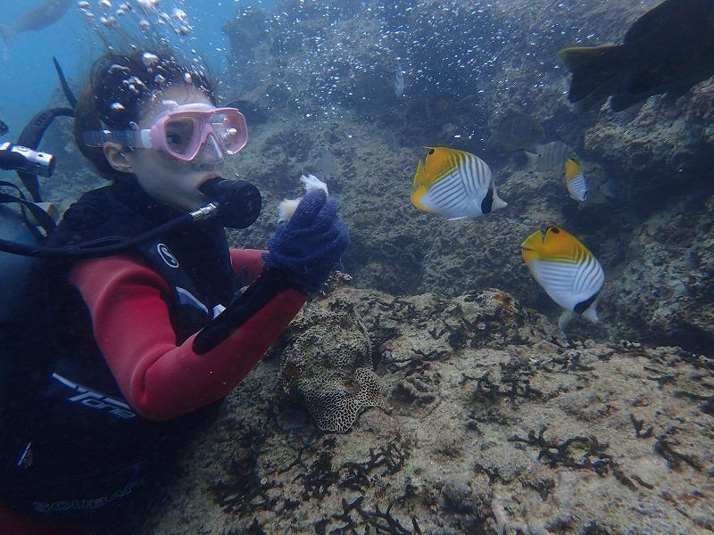 2016.1.23熱帶魚線路體驗潛水