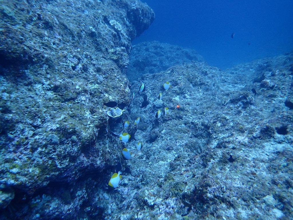 邊戶穹頂有執照潛水(3)