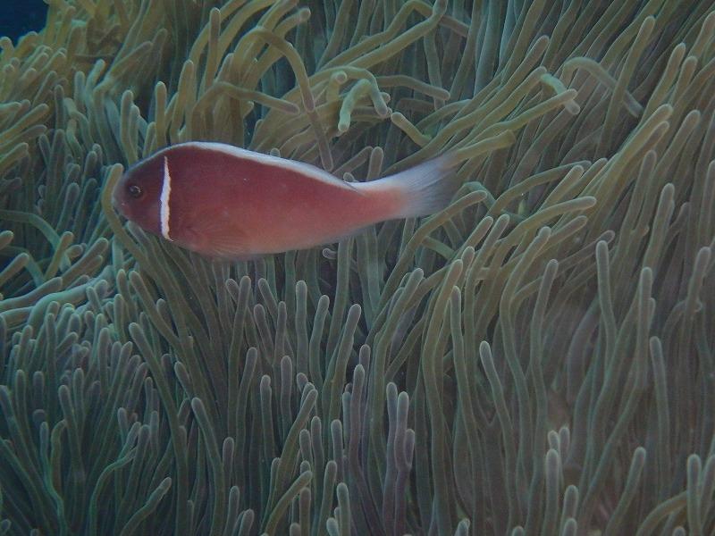 山田熱帶魚珊瑚樂園探索潛水