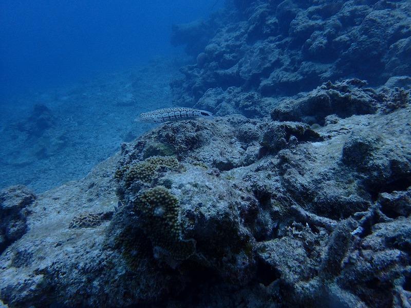 熱帶珊瑚樂園線路