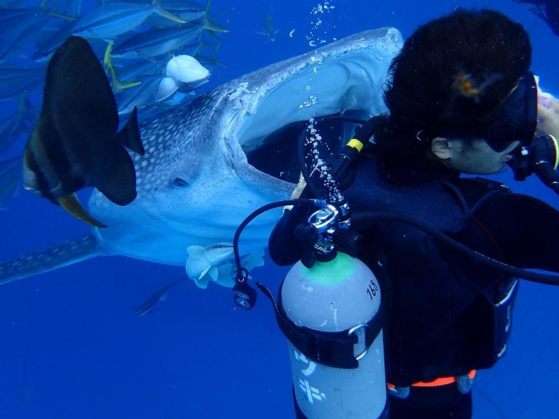 2016.3.4鯨鯊線路體驗潛水