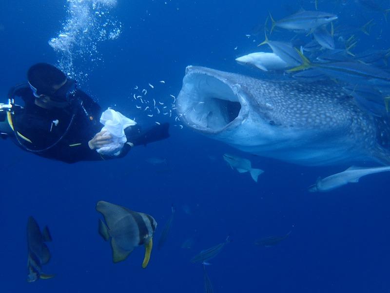 2016.3.18鯨鯊線路體驗潛水
