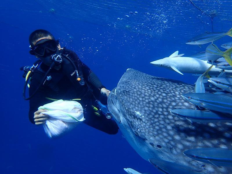 2016.4.23鲸鲨线路体验潜水