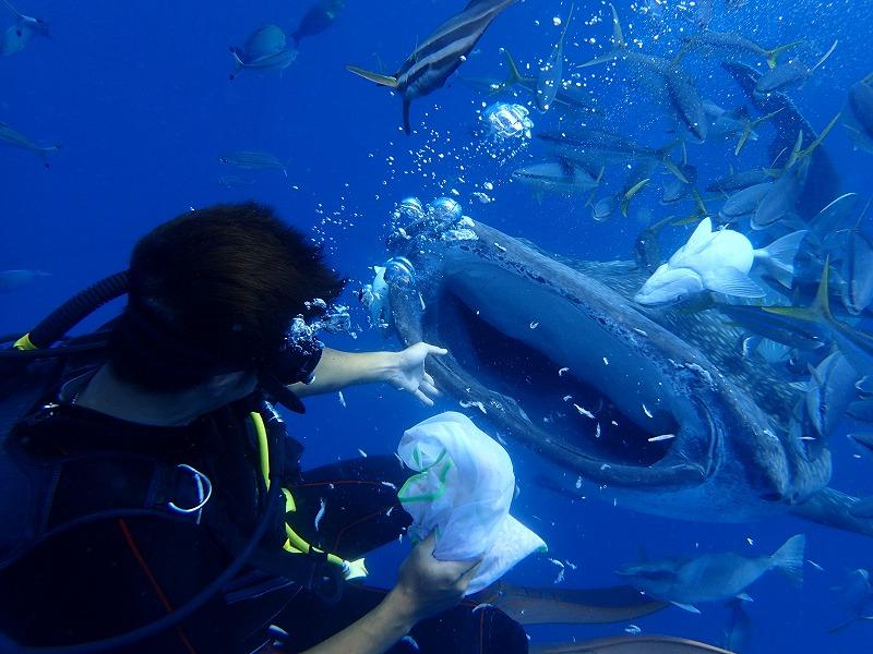 2016年4月26日鯨鯊線路體驗潛水