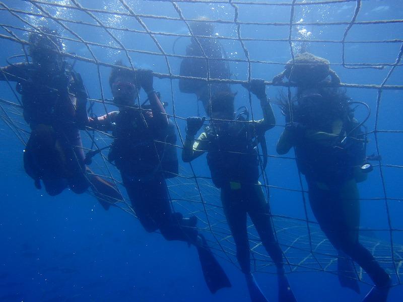 2016年5月28日鯨鯊線路體驗潛水