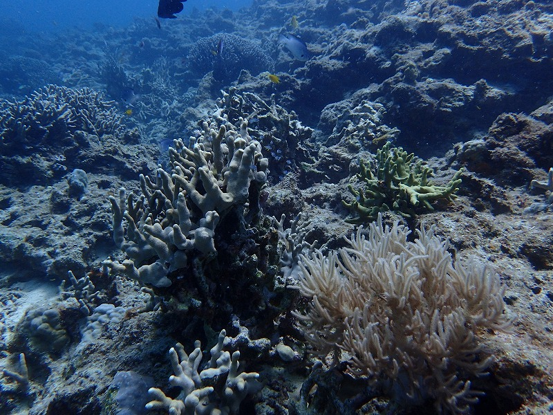 2016年6月22日山田潛水點有執照潛水
