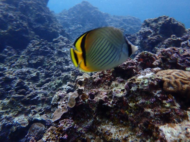 2016/08/21 熱帶魚路線