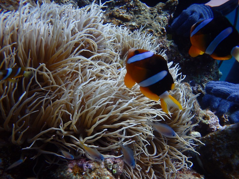 2016年7月13日青之洞窟體驗潛水