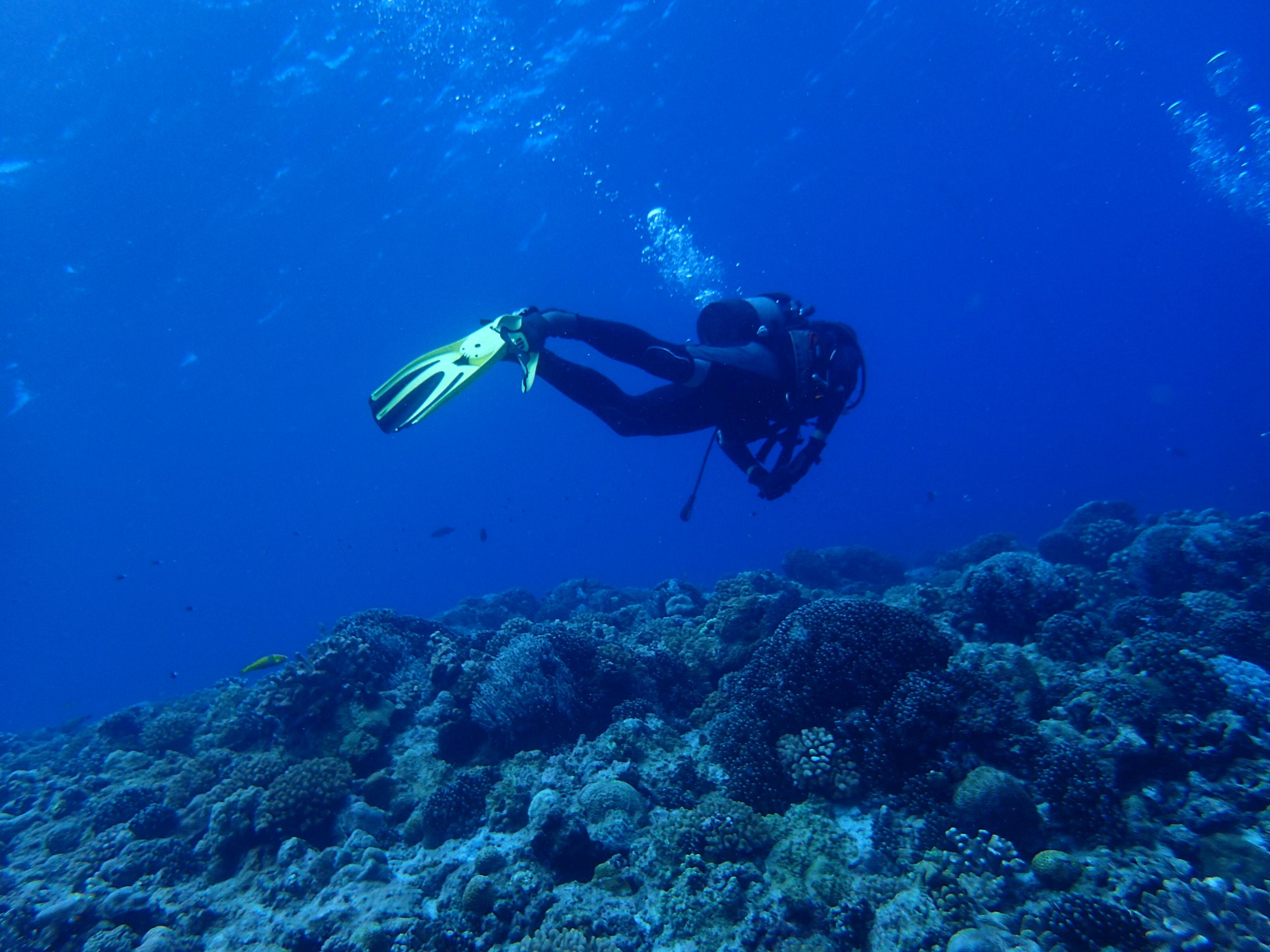 2016年7月15日 慶良間群島線路有執照潛水2