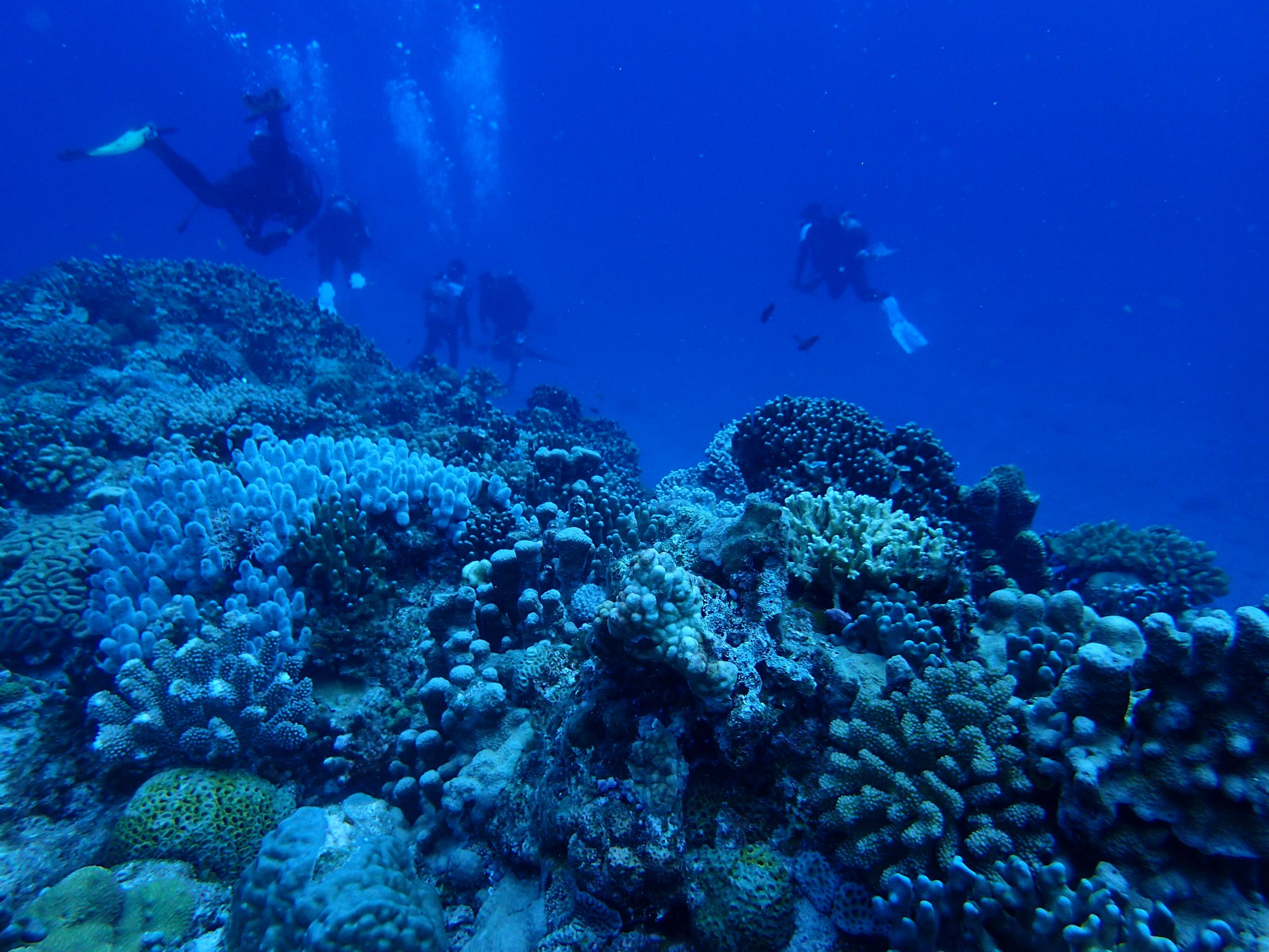 2016年7月15日 慶良間群島線路有執照潛水3