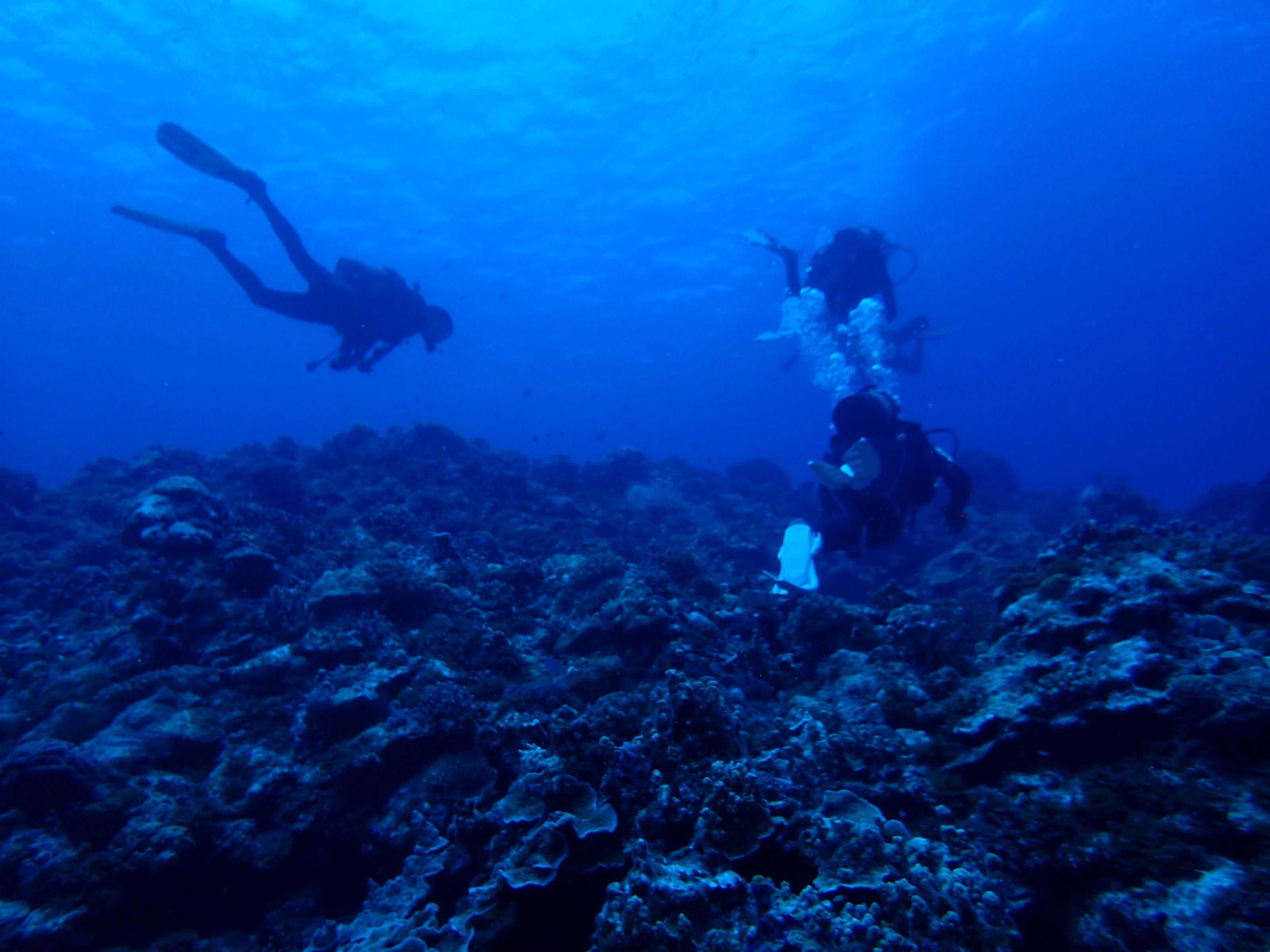 2016年7月15日 慶良間群島線路有執照潛水4