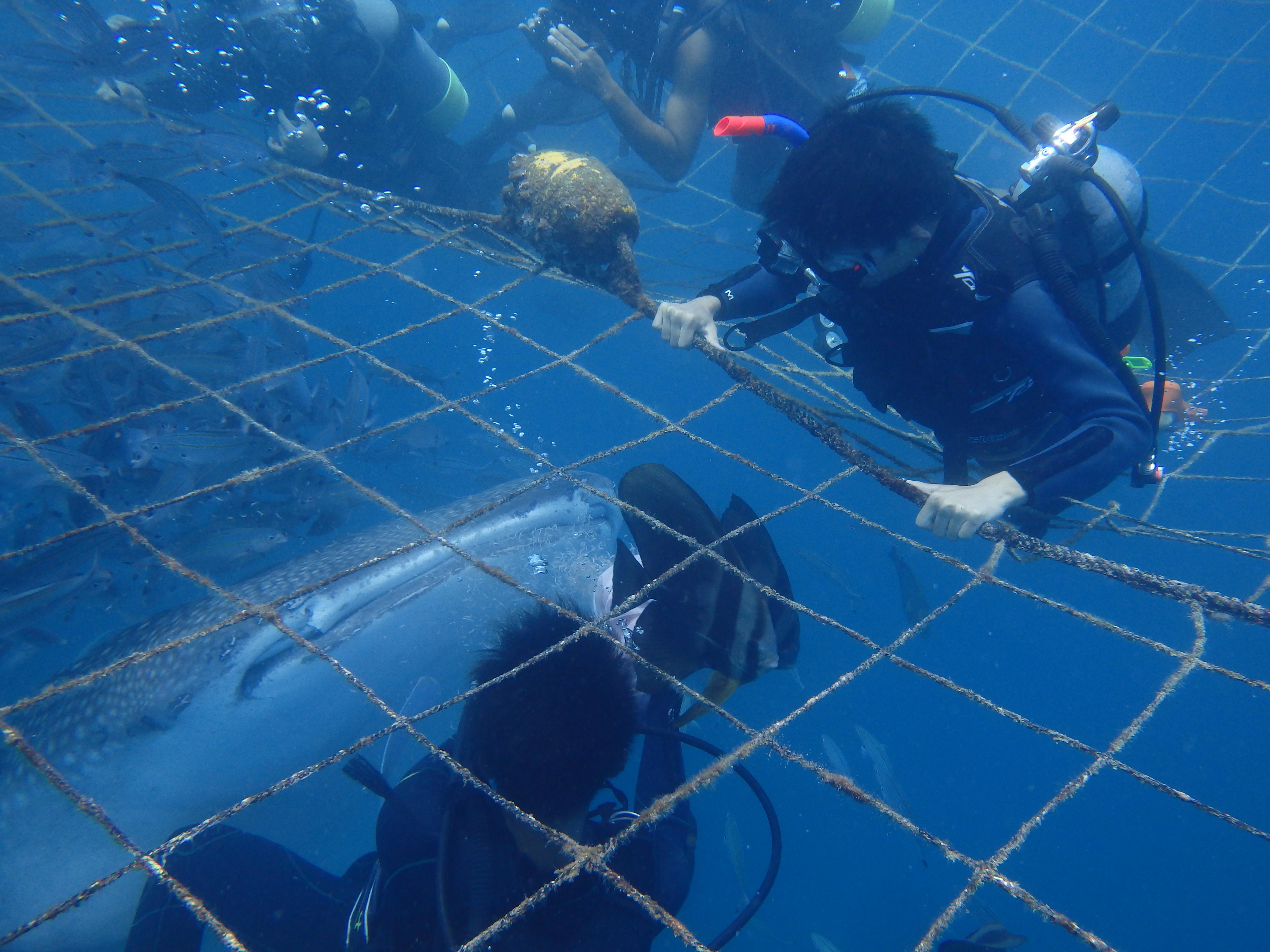 2016年7月27日鯨鯊線路體驗潛水