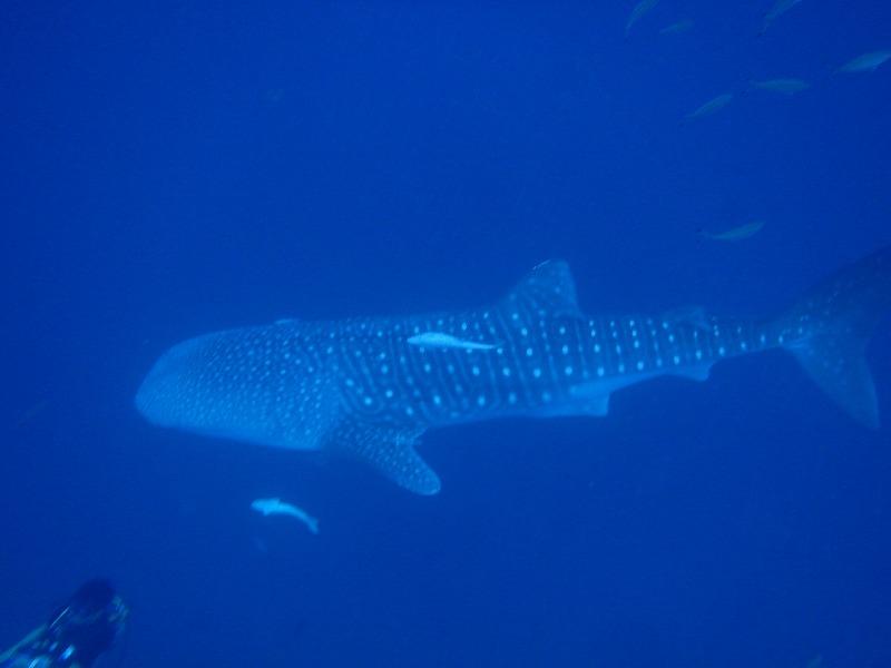 鯨鯊&青洞 套裝旅遊行程 6月