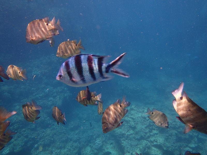 2016/08/06 熱帶魚路線 – 浮潛