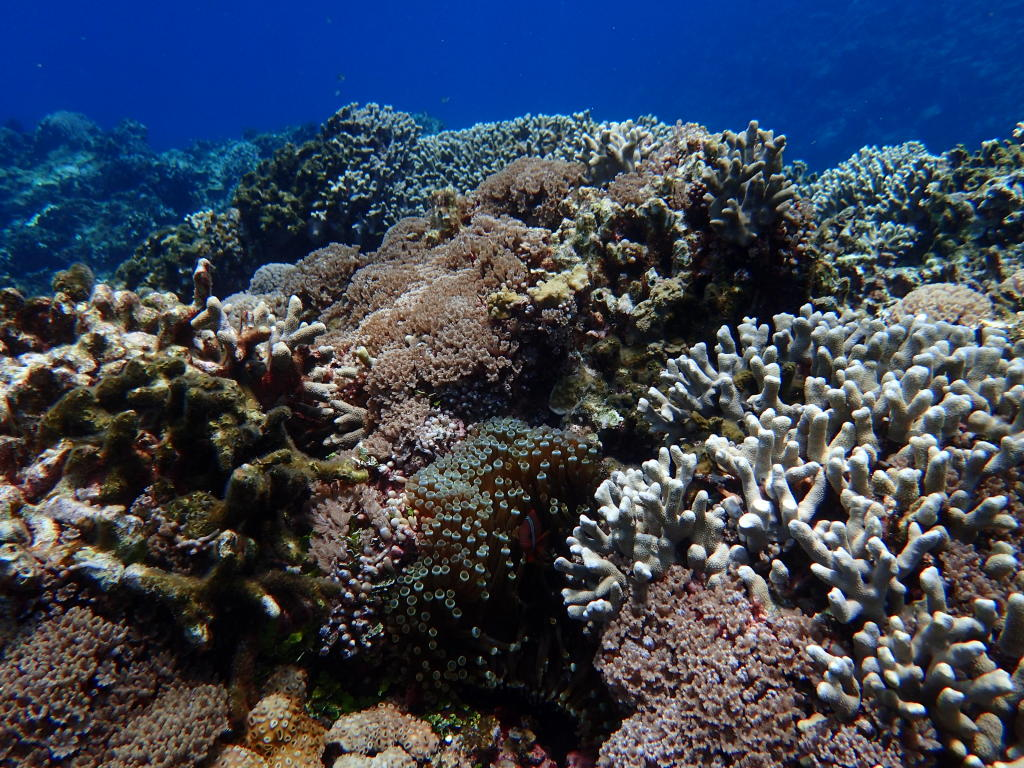 珊瑚 okinawa