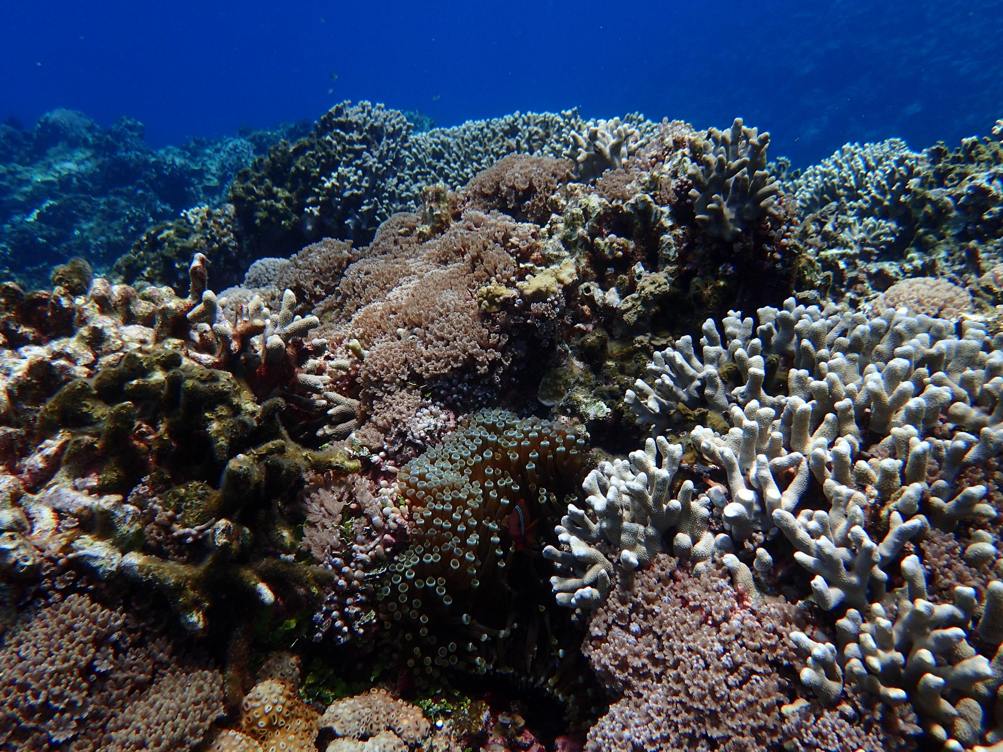 2016年慶良間群島線路有執照潛水6