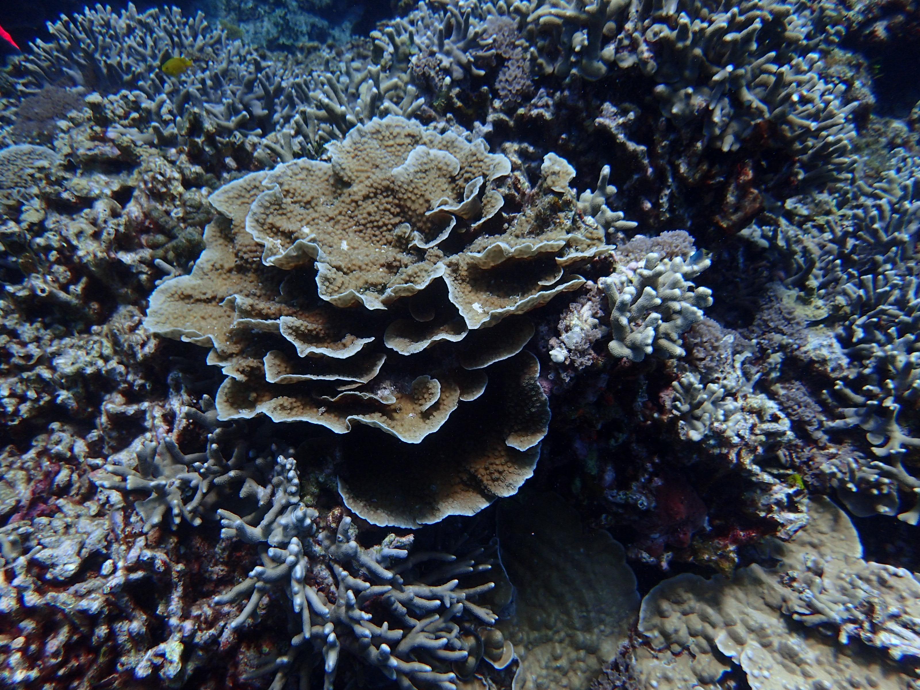 2016年慶良間群島線路有執照潛水8