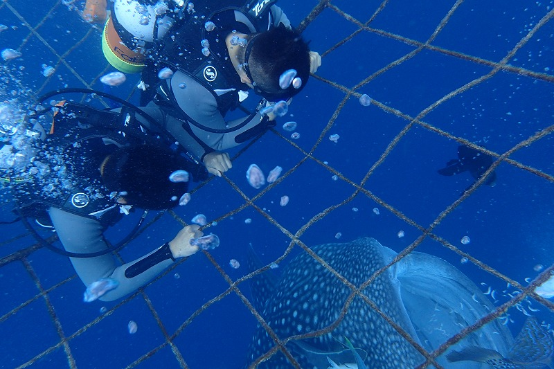 2016年9月16日 鯨鯊線路體驗潛水