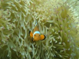 课程热带鱼