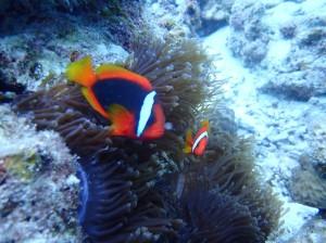 海洋生物part1