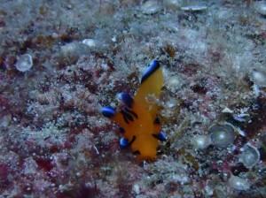 在沖繩享受浮淺!也能餵魚,跟熱帶魚們近距離接觸!