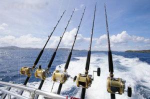 以大型魚為目標獵物