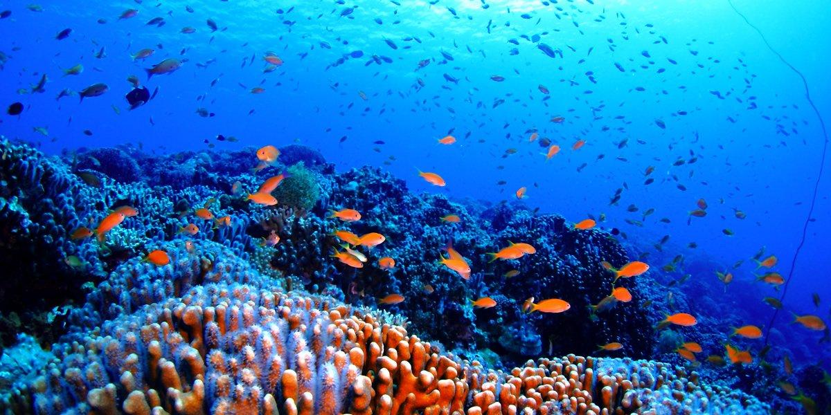 慶良間諸島深潛(有執照)四個眼睛的照片