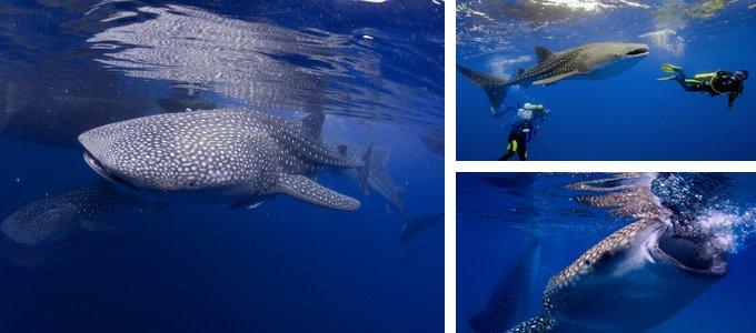 壁纸 动物 鲸鱼 680_300